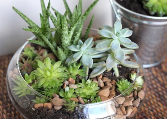 indoor-succulent-garden-willard-and-may
