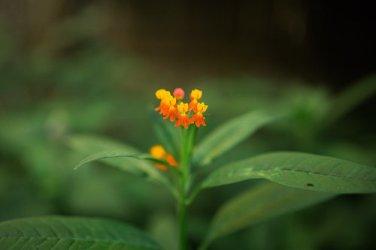 Flower-1-14