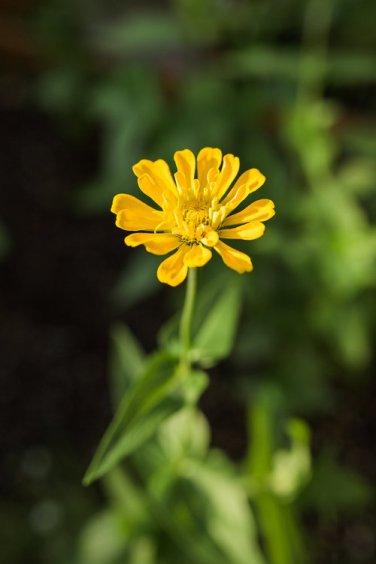 Flower-1-7